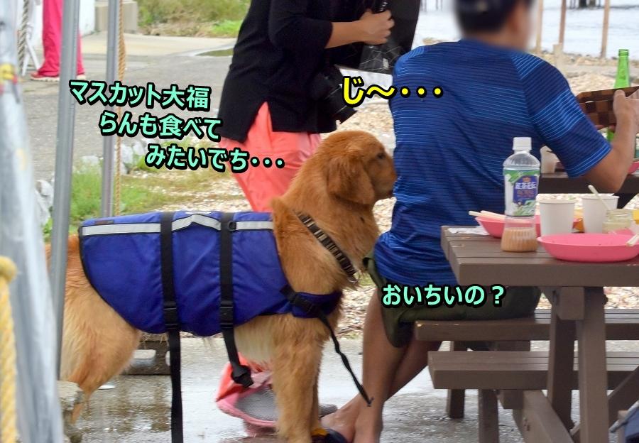 DSC_3918 ji~