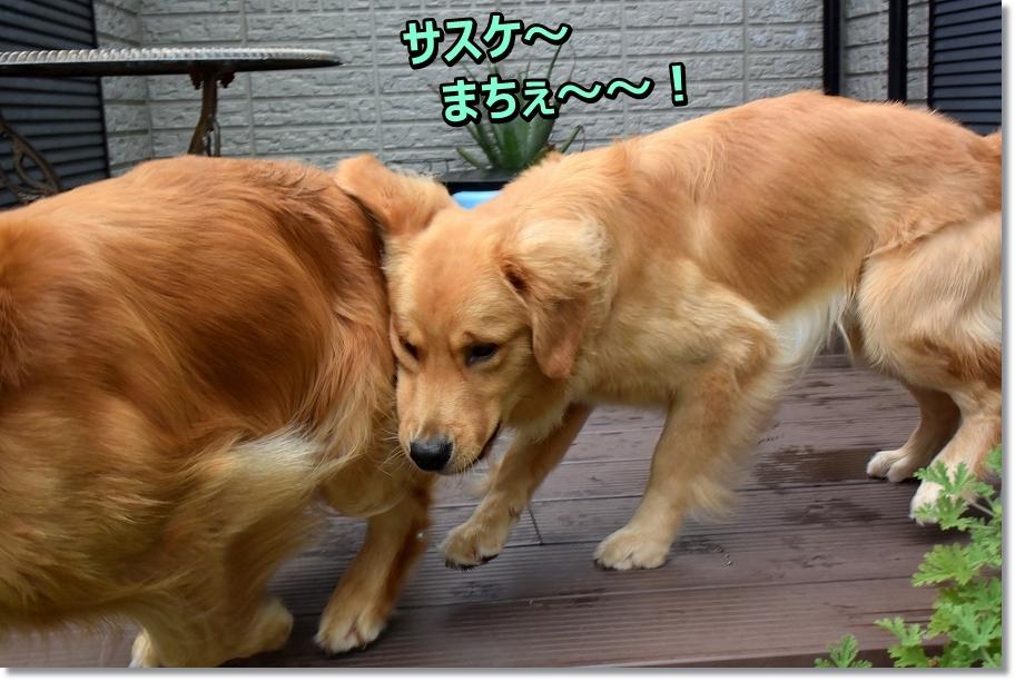 DSC_3690 しょれ~
