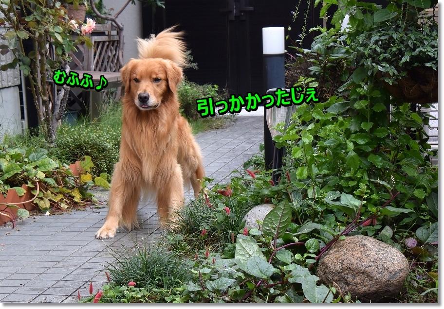 DSC_3692 muhu~hikakata