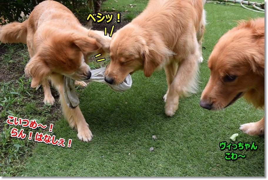 DSC_3726 こいつ~!