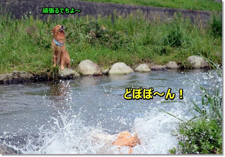 DSC_3509 どぼん