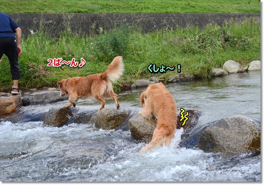 DSC_3852くしょ~