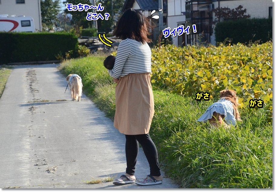 DSC_4341 モっちゃ~ん