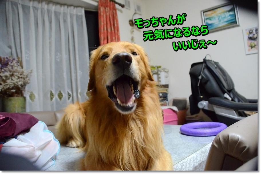 DSC_4585 モっちゃんのベッドでちか