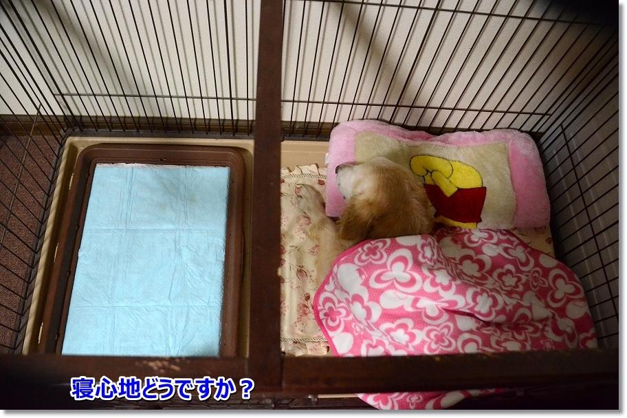 DSC_4592 寝ごごちは?