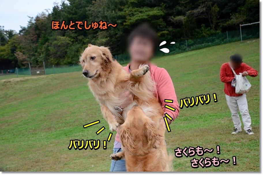 DSC_4695こなつ