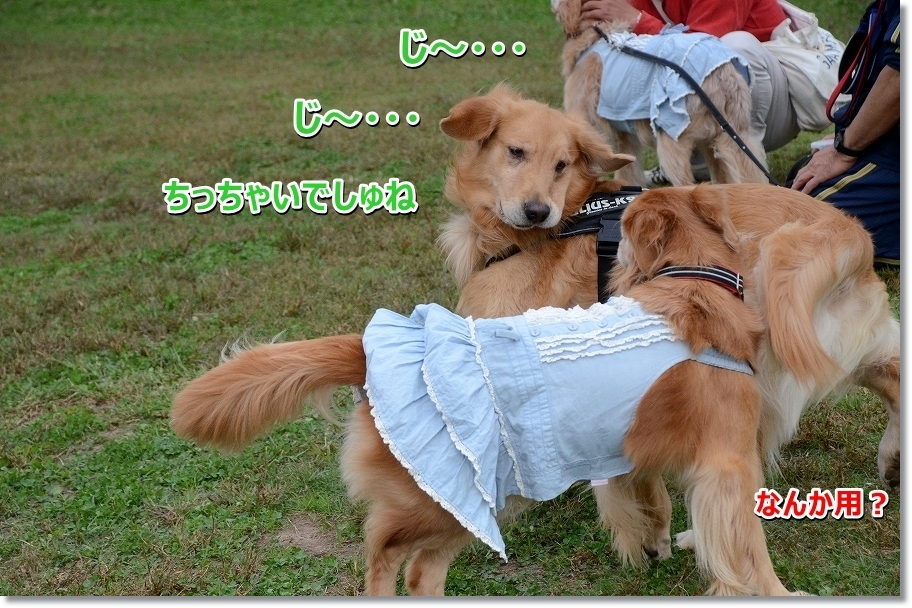DSC_4730じ~