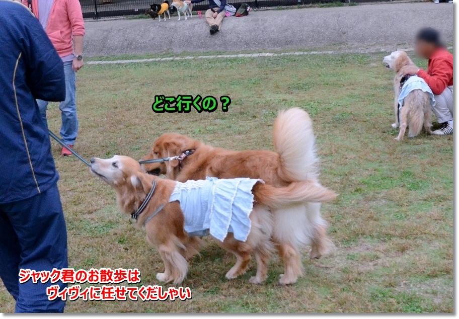DSC_4894 おさんんぽ