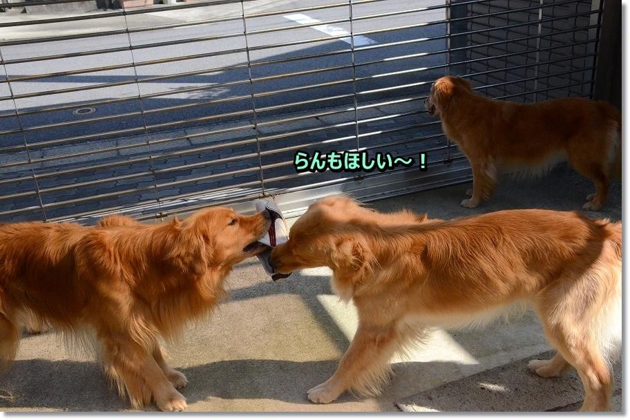 DSC_4083わ~