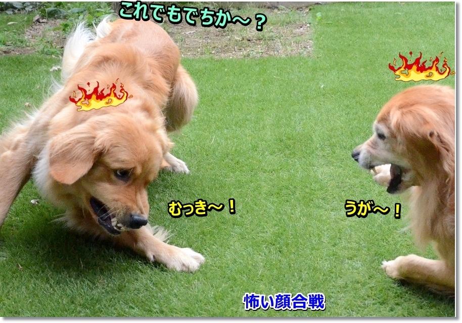 DSC_4628 怖い顔合戦!