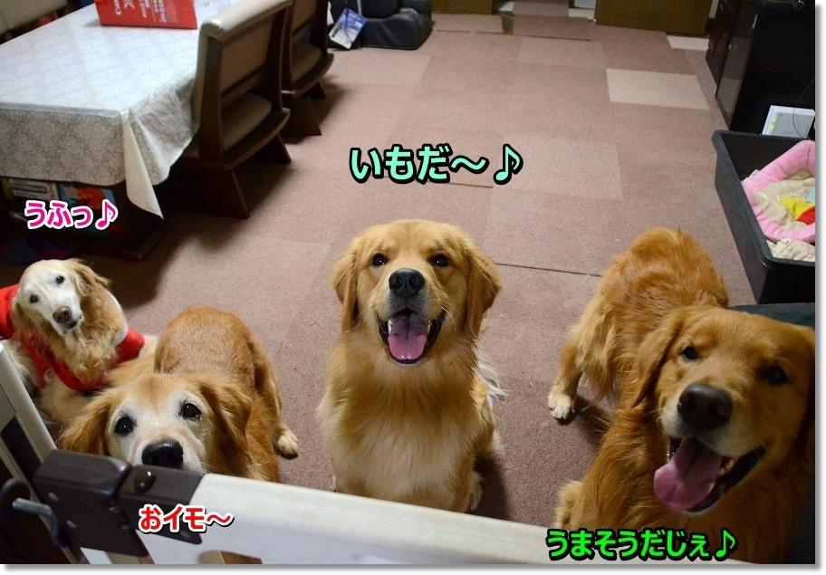 DSC_5204 お芋~