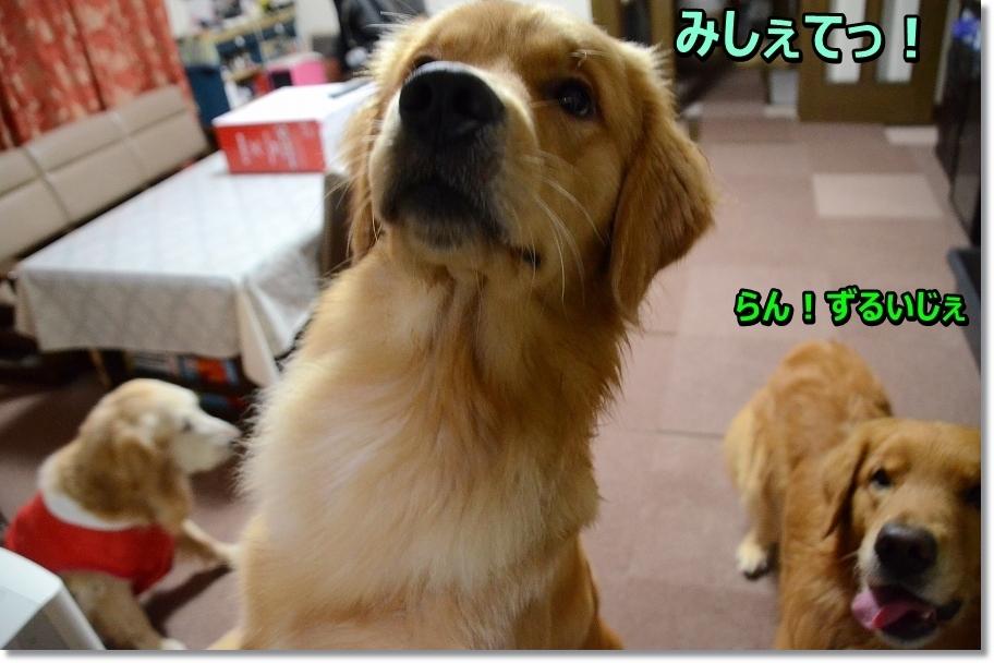 DSC_5205みしぇて