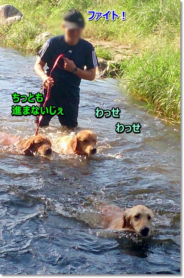 DSC_0130_2016101714212763d.jpg