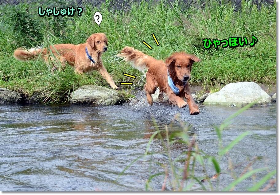 DSC_3641_20161022235101bd8.jpg