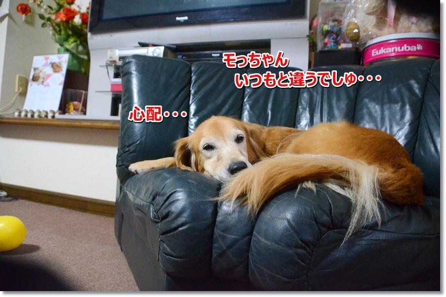 DSC_4582_201610261935099e9.jpg