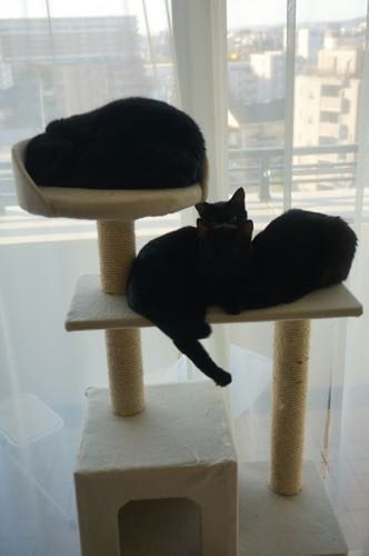 黒猫タワー
