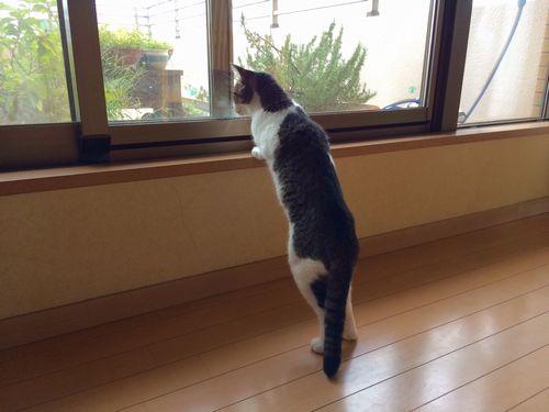 ティガ4窓の外