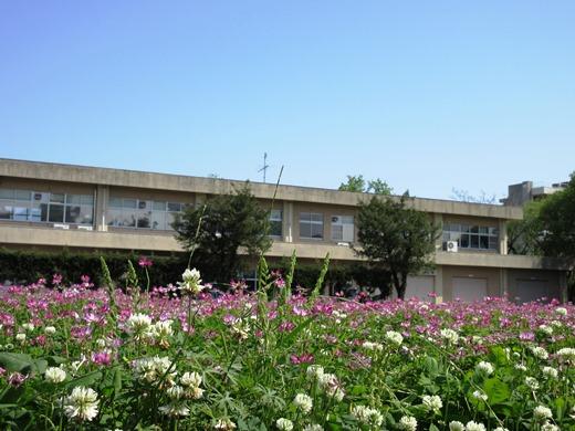 blog附属農場 レンゲ(2)