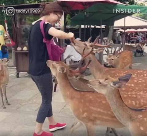 海外「欧州も日本に学ぼう!」 奈良の鹿にスポットを当てた動画が海外で大反響