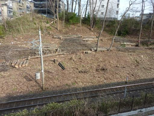 樹木の伐採―何のために?
