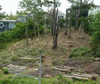 JR仙山線沿い、何のための樹木伐採a