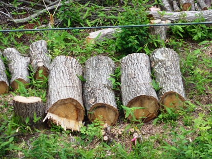 JR仙山線沿い、何のための樹木伐採b