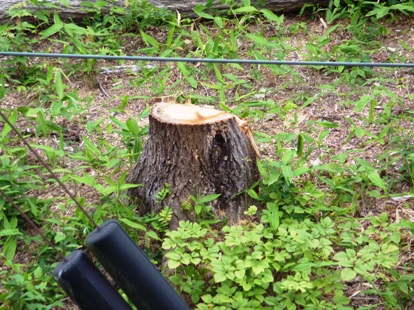 JR仙山線沿い、何のための樹木伐採c