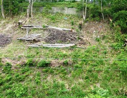 JR仙山線沿い、何のための樹木伐採d