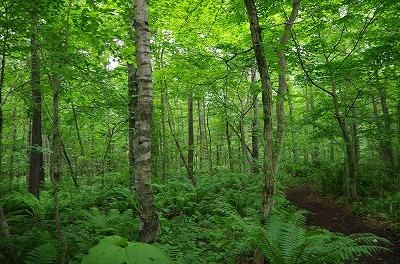 イコロの森201606-002