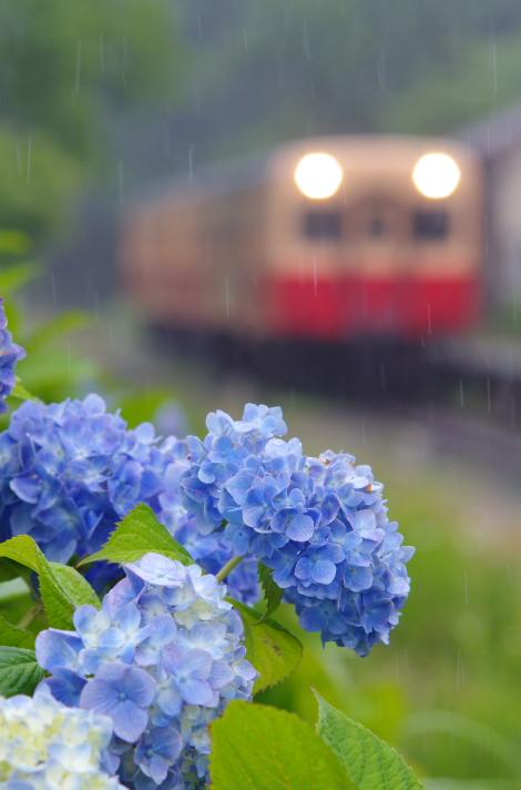 2016年06月13日 小湊_037
