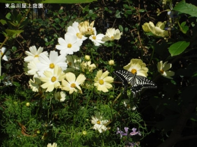 kocyo3209.jpg