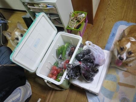 道の駅『幸田 筆柿の里』で買ったもの