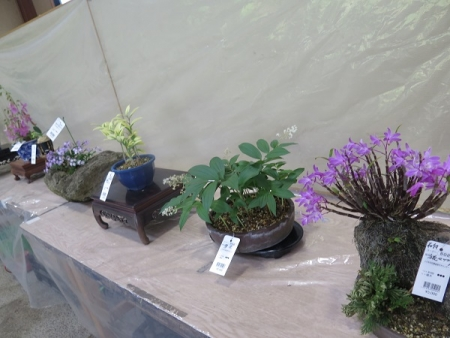 緑花木センター