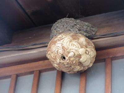 中山道 妻籠宿 スズメバチの巣