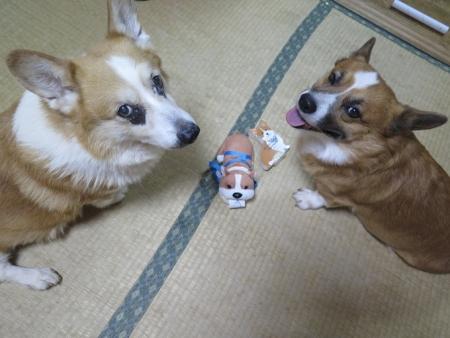 頂いた可愛いの(^^*)