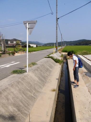 8.15 KINO31