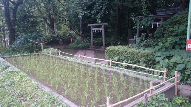 石神井6月 (2)