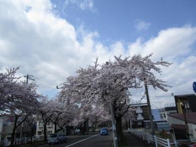 桜2016-4-1