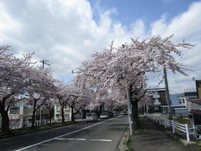 桜2016-4-2