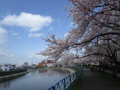桜2016-4-3
