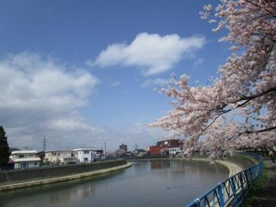 桜2016-4-5