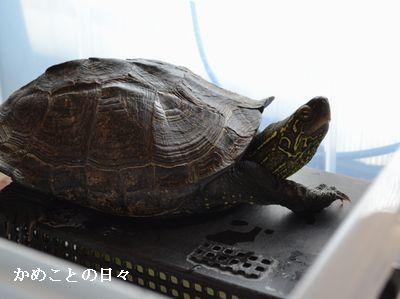 DSC_0037-c.jpg