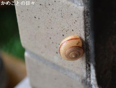 DSC_0438-k.jpg