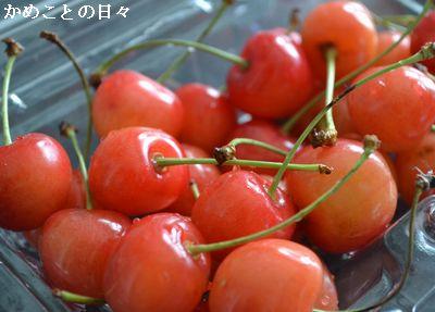 DSC_0507-s.jpg