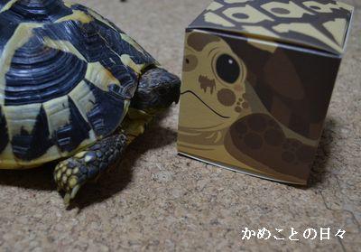 DSC_0524-f.jpg