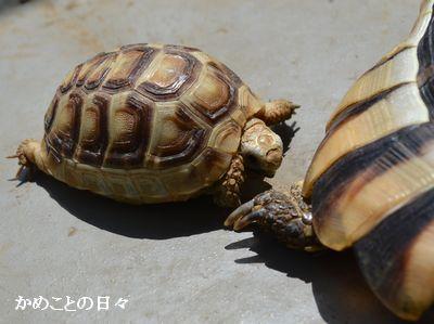 DSC_0541-t.jpg
