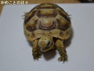 DSC_0587-t.jpg