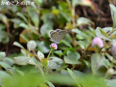 DSC_0708-b.jpg