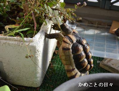 DSC_0917-m.jpg