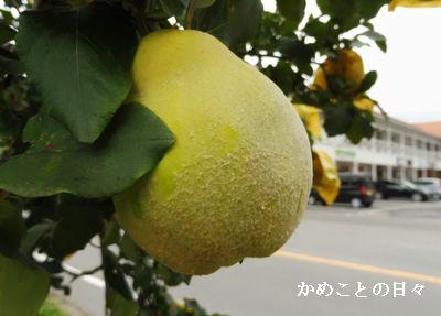 P1010595-k.jpg